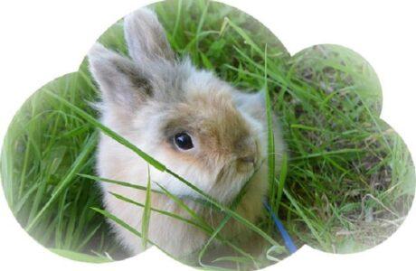 До чого сниться Кролик жінці, чоловікові — тлумачення сну про Кролика за різними сонниками