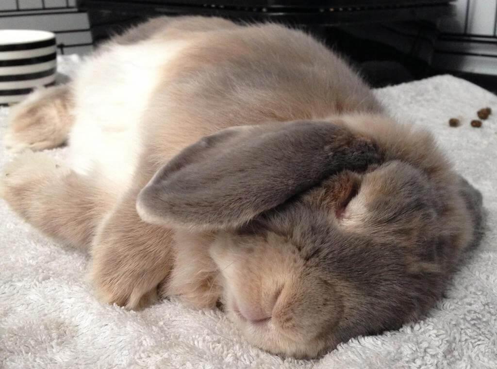 К чему снится кролик толкование.