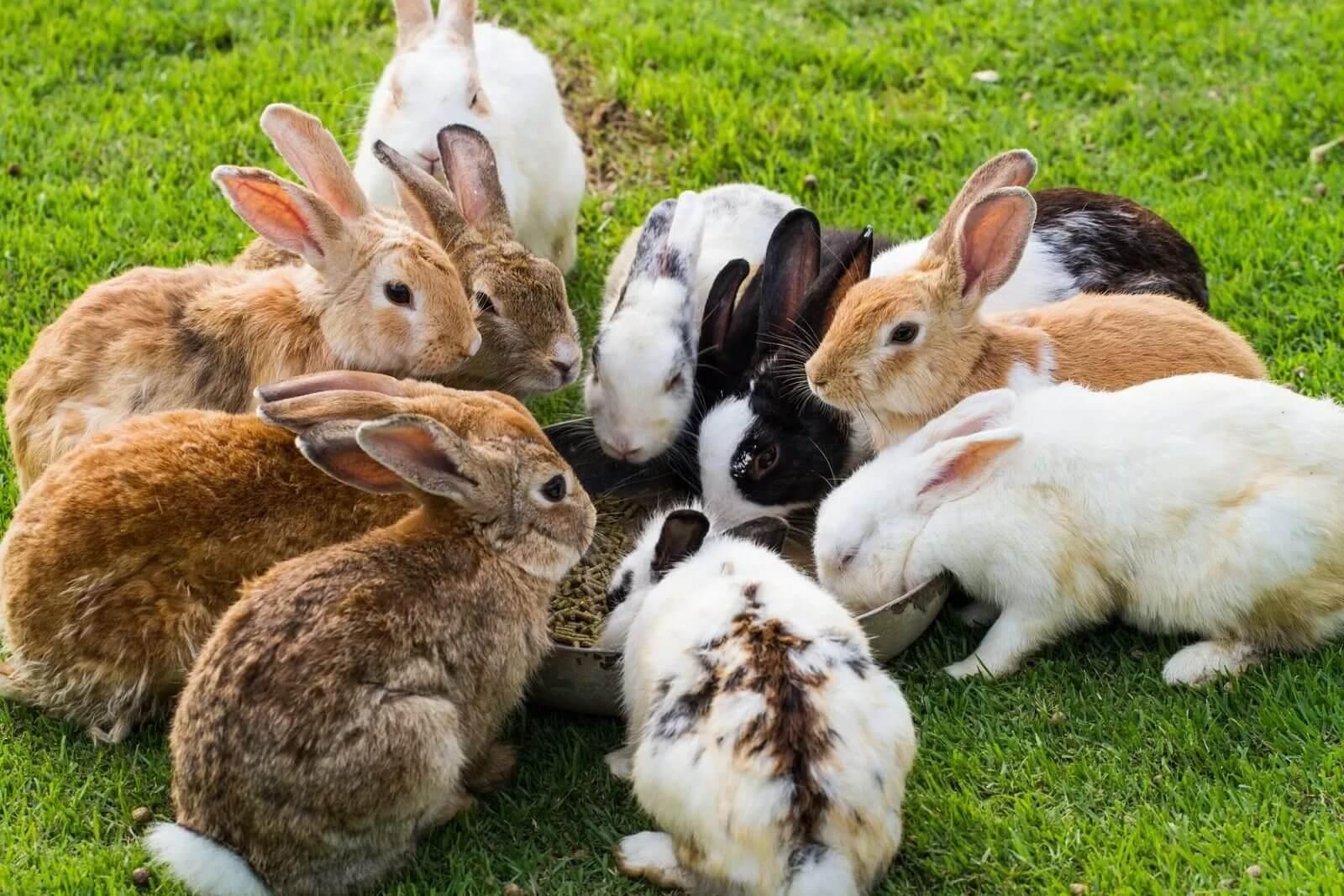 К чему снится кролик значение сна.