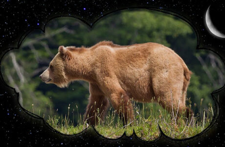 К чему снится Медведь женщине, мужчине — 75 толкований сна