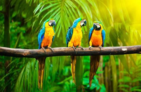 До чого сниться Папуга жінці, чоловікові — тлумачення сну про Папугу за сонниками