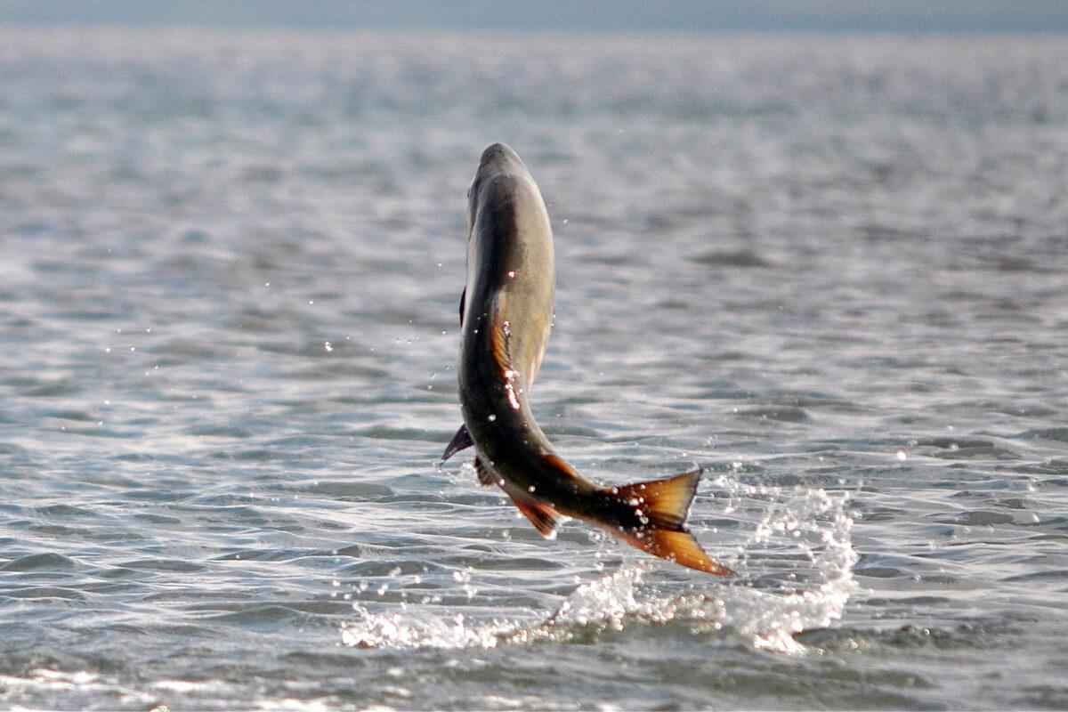 До чого сниться риба тлумачення.