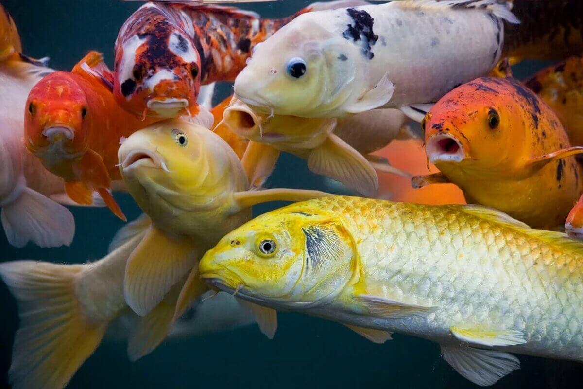 До чого сниться риба трактування.