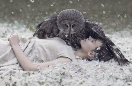 К чему снится Сова женщине, мужчине — 50 толкований сна