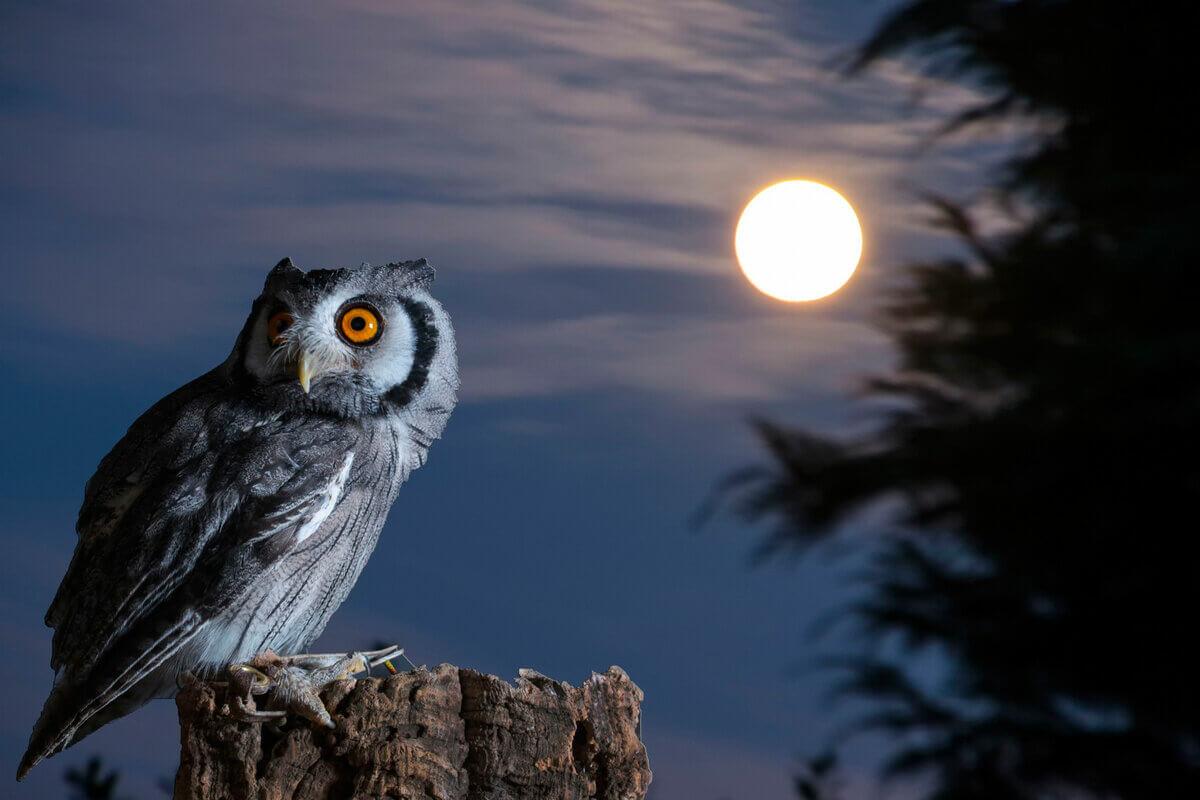 К чему снится сова трактовка сна.