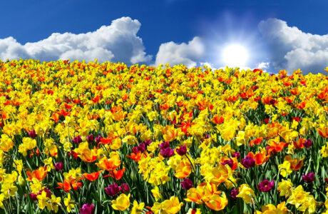 До чого сняться Квіти живі в букетах, горщиках — тлумачення сну про Квіти по сонникам