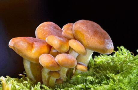 Бачити уві сні гриби