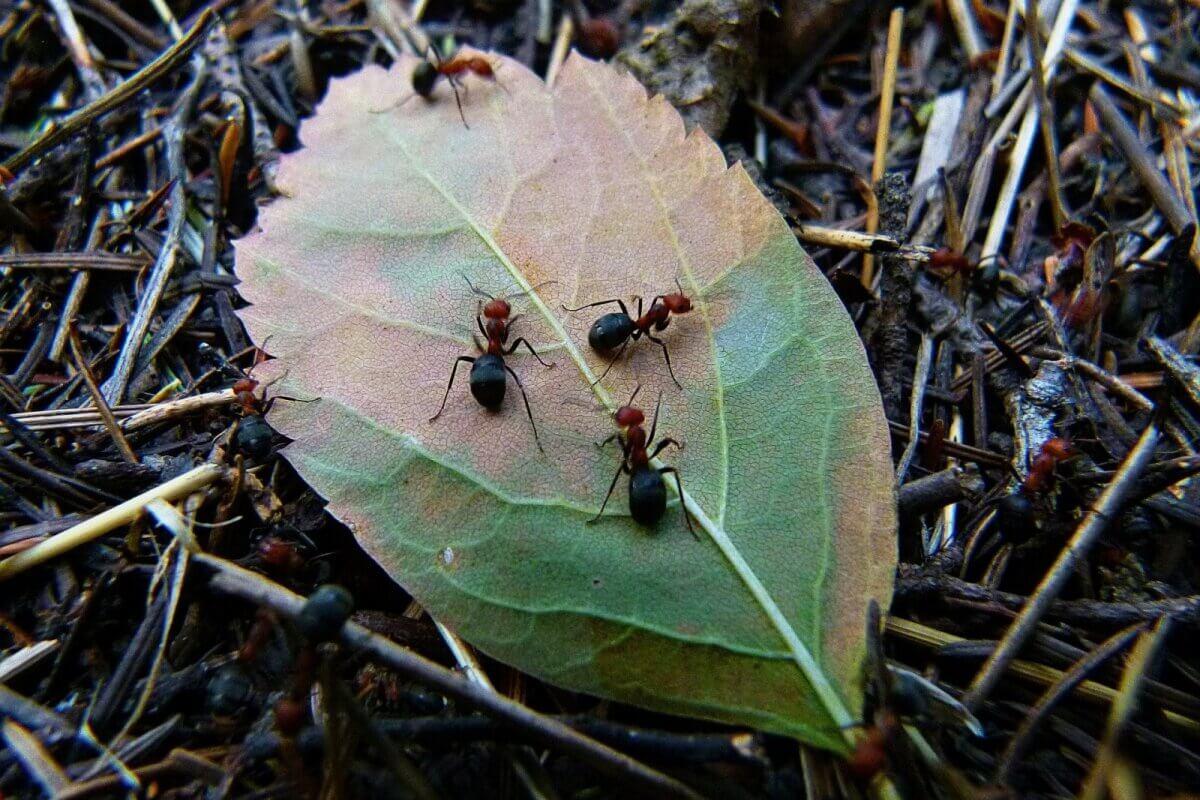 К чему снятся муравьи толкование.