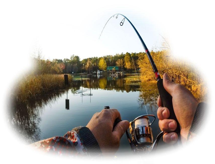 Ловить рыбу во сне сонник.