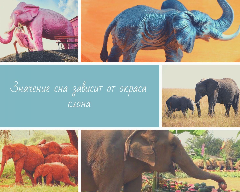 Цвет слона