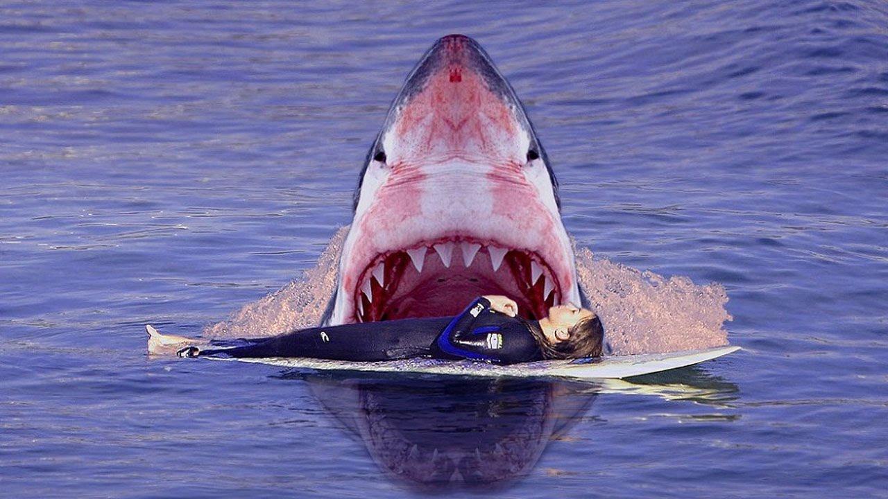 К чему снится акула толкование сна.