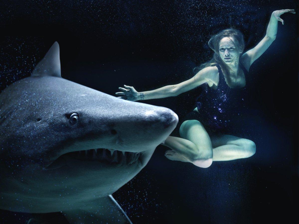 К чему снится акула значение сна.