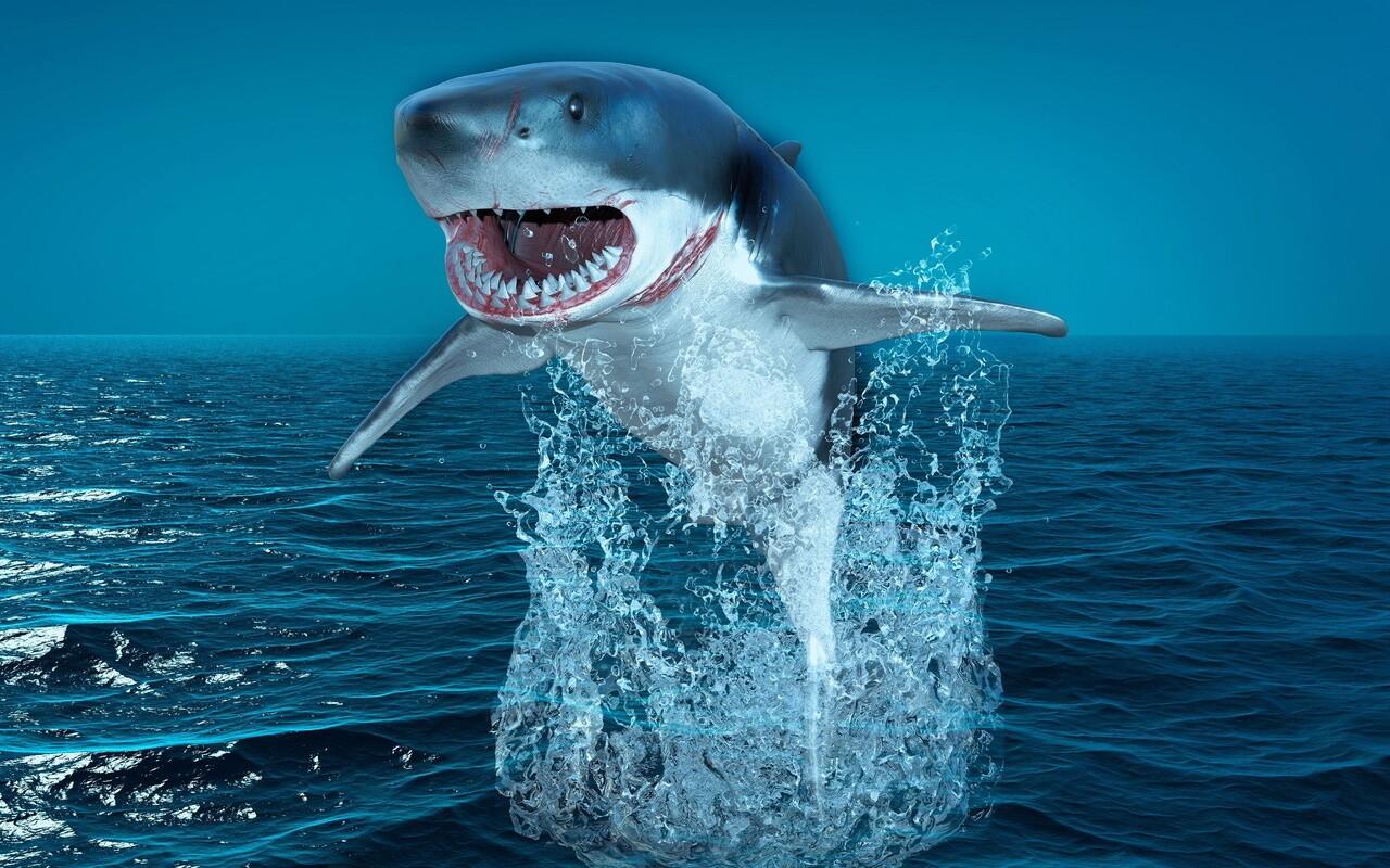 К чему снится акула значение.