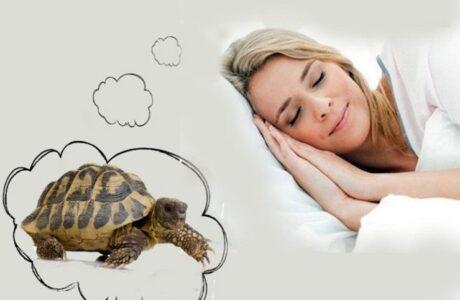 К чему снится Черепаха женщине или мужчине — 40 толкований сна