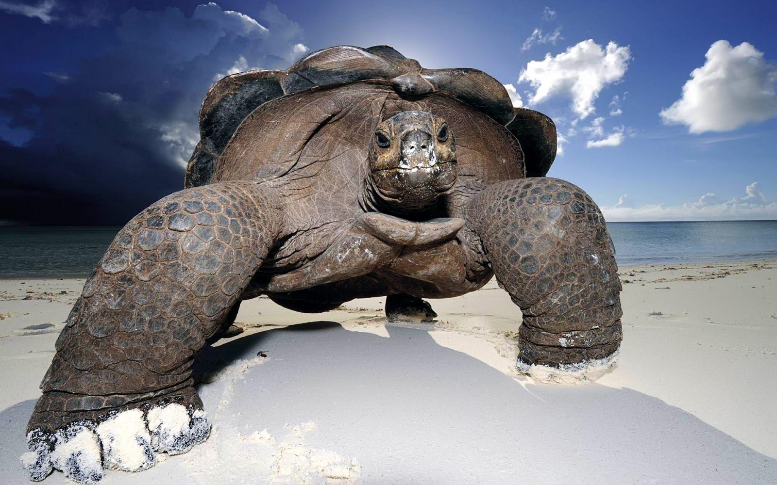 До чого сниться черепаха значення.