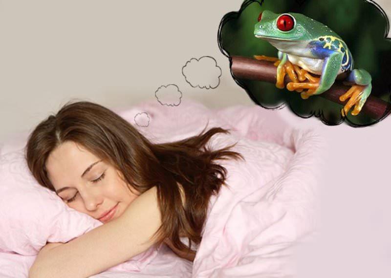 К чему снится лягушка значение.