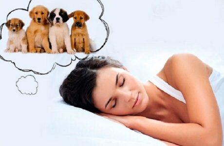 До чого сниться Цуценя жінці, чоловікові — 85 тлумачень сну