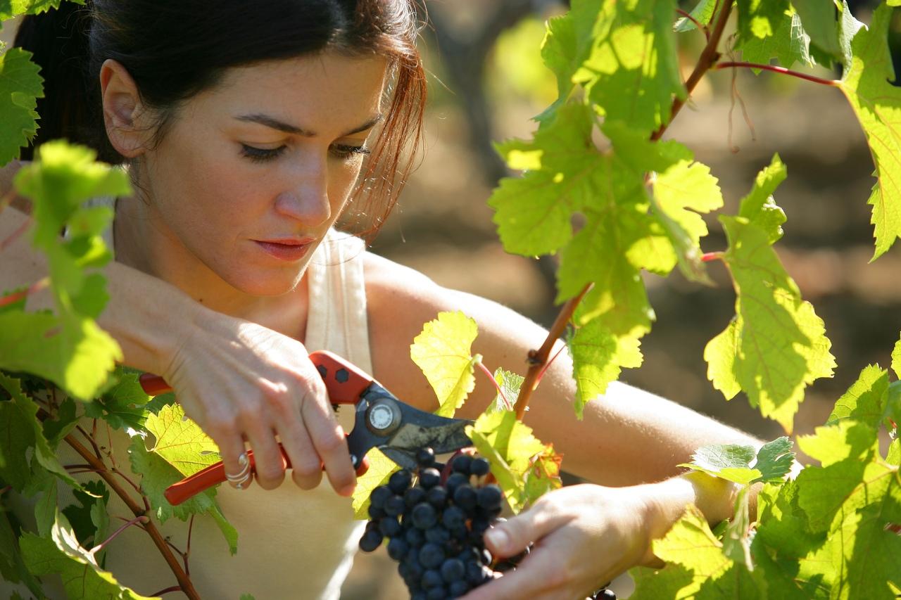 К чему снится виноград толкование сна.