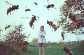 к чему снятся осы