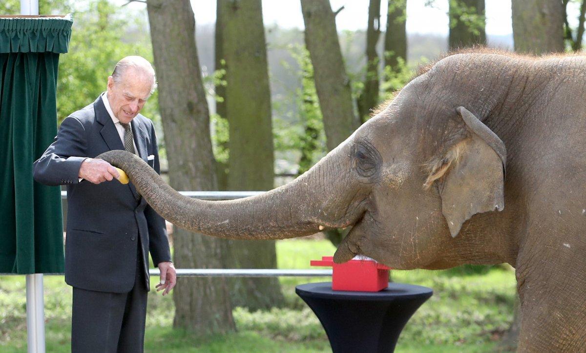 Кормить слона с руки