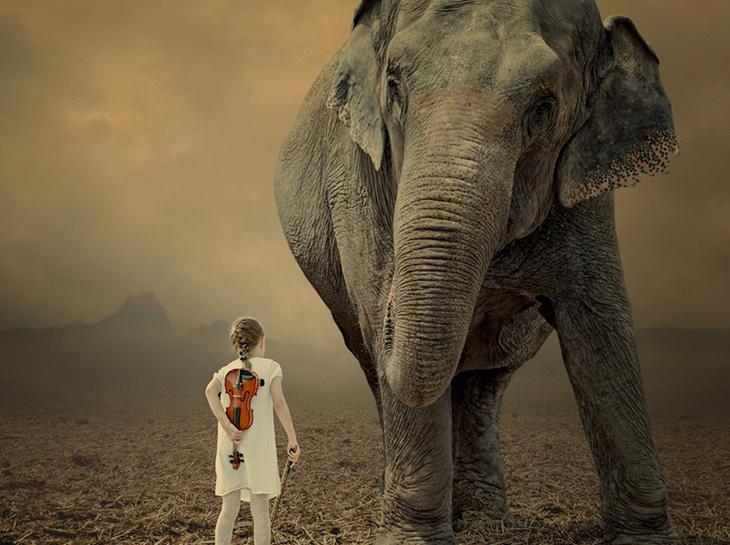 Слон приснился женщине