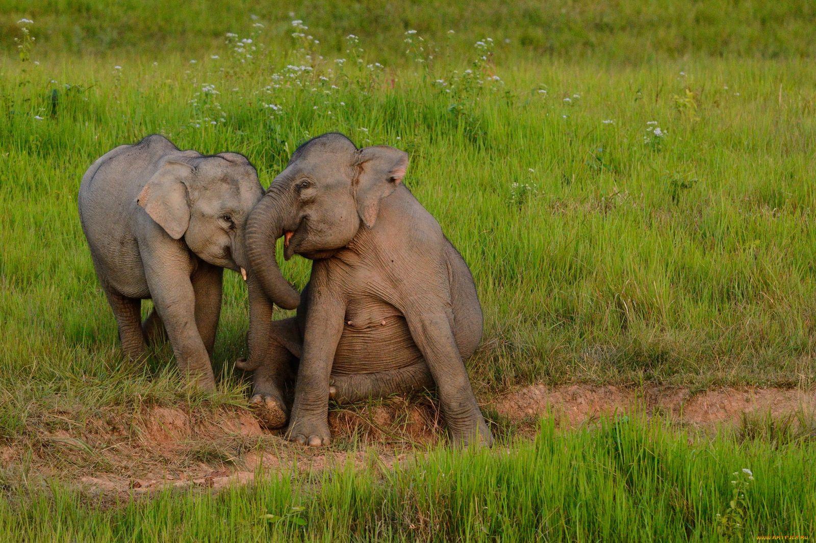 Приснились слонята